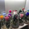 Երկարակյաց վարդեր — 21սմ